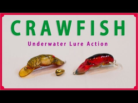 Rebel CRAWFISH Underwater Lure Action / レーベル クローフィッシュの水中ルアーアクション