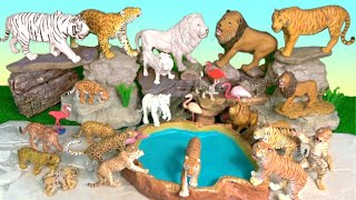 Big Cat Week 2019 NEW Lions Tigers Wild Animals White Lion White Tiger Jaguar and Leopards