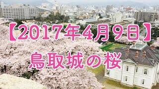 【2017年4月9日】鳥取城の桜【市街を一望】 鳥取城 検索動画 23