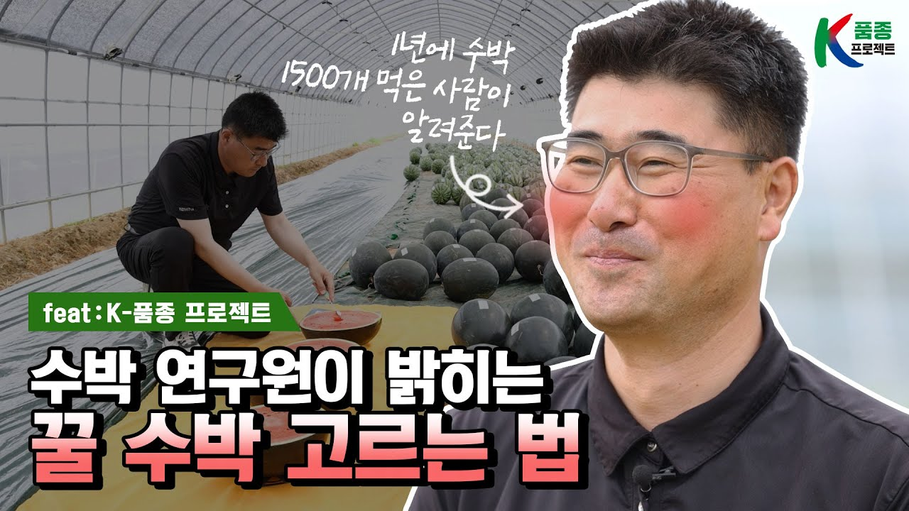 [K품종 프로젝트] 수박 연구원이 밝히는 꿀 수박 고르는 법🍉