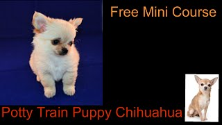 Potty Train Puppy Chihuahua **WOW** Free course to Potty Train Puppy Chihuahua