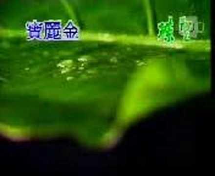 Jacky Cheung & Tang Bao Ru  - Xiang Si Feng Yu Zhong