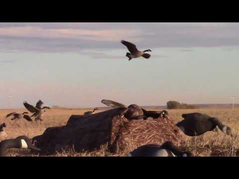 Waterfowl Hunting On The Blackfeet Reservation