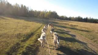 Sessvoll oct 16- Trainingrun with 8 siberian huskies  and Troll cart