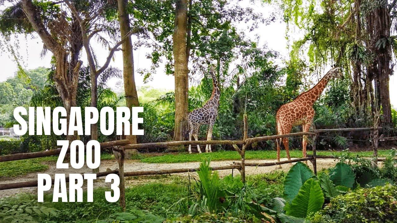 Singapore Zoo Walking Tour (Part 3 - Final)