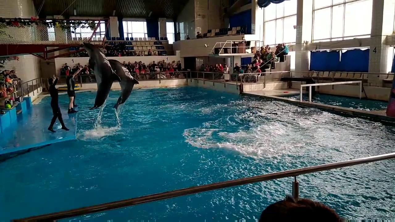 Картинки дельфинарий в челнах