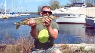FISHING at CENTRE ISLAND, TORONTO with Blair (LOTS of PIKE!)    MAY 15, 2013