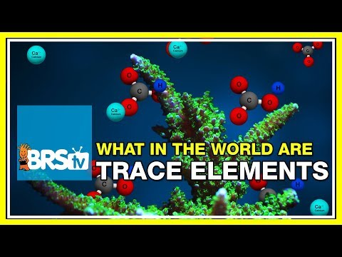 Week 33: Trace Elements: Is supplementation right for your tank? | 52 Weeks of Reefing #BRS160