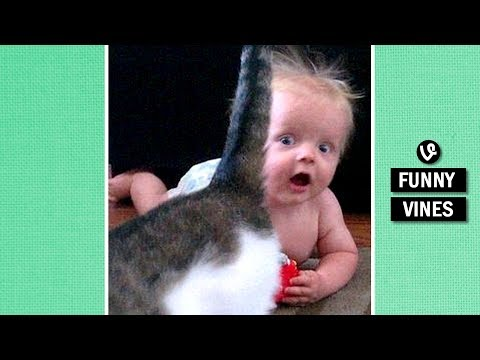 Thumbnail: IMPOSSIBLE TRY TO STOP LAUGHING challenge - Super FUNNY BABY & ANIMAL VINE compilation