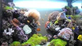 Красивые рыбки в аквариум(, 2014-09-24T17:46:23.000Z)