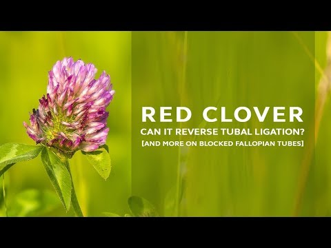 can-red-clover-reverse-tubal-ligation?