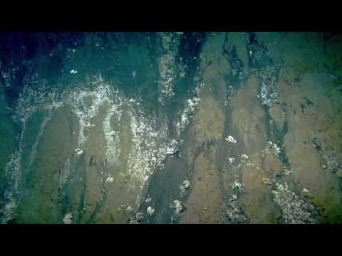 Sampling at Kick 'em Jenny | Nautilus Live