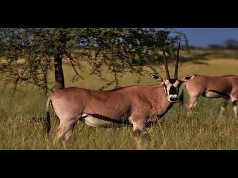 Watch Awash National Park Ethiopia
