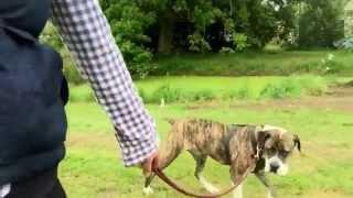 Emma Gunary Clicker Training. Aa Dog Rescue. Zena Doing Some Lead Training. Calming Circles, Slowly