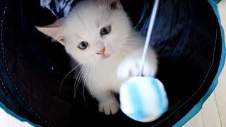 貓隧道玩具值得購買嗎?Does the kitten like this cat toy?