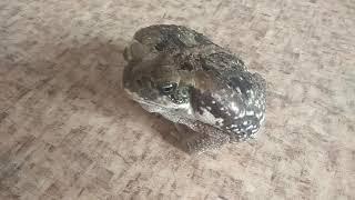 Зелёный змей и жаба  Ага.