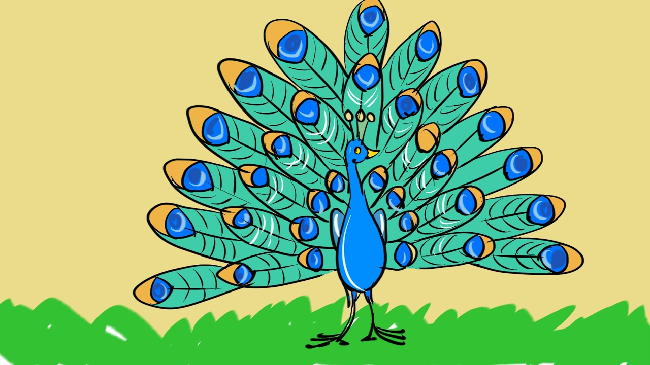 how to make peacock drawing