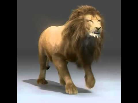 Rigged and Animated Lion for 3ds Max, 3D Studio, Cinema 4D, Lightwave, and  Maya