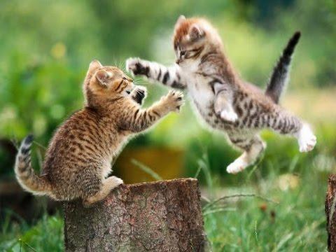 Драка котов в замедленной