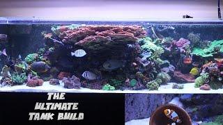 Ep 2. Picking up My Reef Savvy Tank