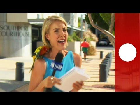 Parrot surprises TV journalist moments before live broadcast, Australia