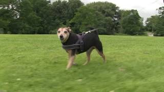 UEA study finds dog walking can keep owners healthy in later life