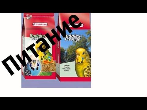 Питание попугая ч.1. Какой корм можно волнистому попугаю. Разрешённые корма и лакомства #еда