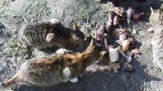 коты едят колбасу и рыбу