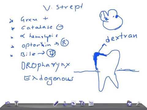 Streptococcus viridans: характеристика возбудителя и инфекции