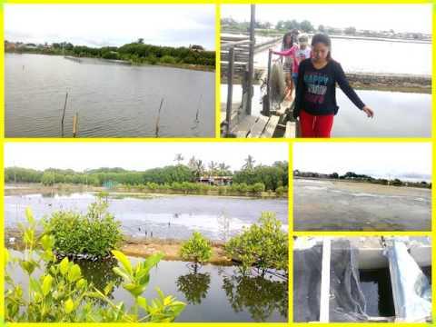 BS Fisheries (Practicum In Aquaculture)