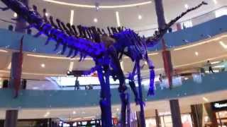 Sauropod Dinosaur at Dubai Mall.  08.04.2014