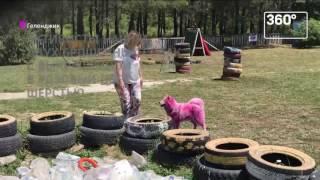 Волонтеры из Геленджика спасли розовых самоедов
