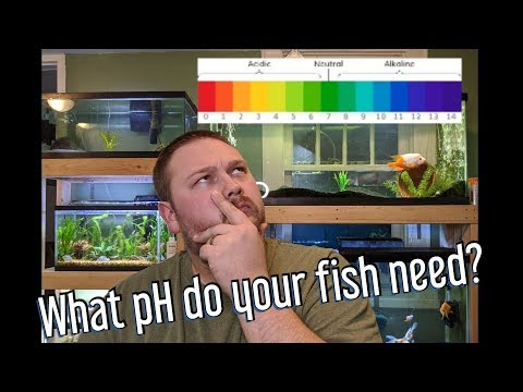 Aquarium PH - How To Raise And Lower PH, And Do You Need To?