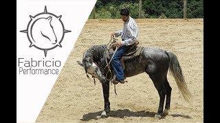 FP: Início do controle das 5 partes do cavalo