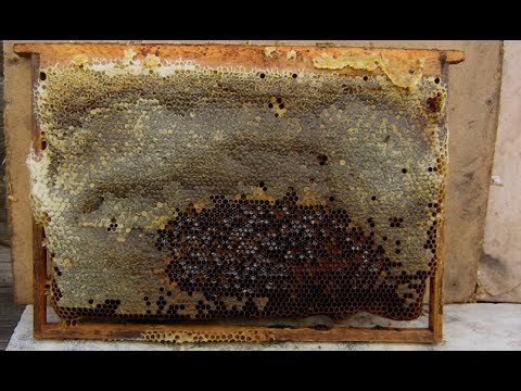 12. Что делать с рамками на которых присутствует прошлогодний мед? - Пчеловодство для начинающих.