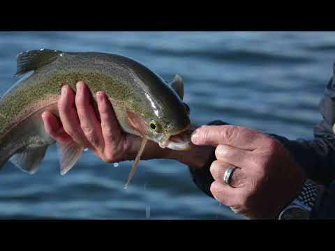 Grafham Water Trout Bank Fishing - November '17
