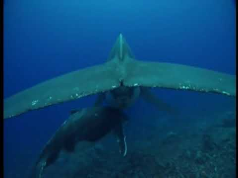 Relaxing ocean sounds breathtaking underwater footage