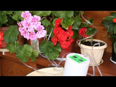 Как поливать цветы во время отпуска  Автоматический полив – и нет проблем!