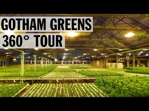 360° Tour of Gotham Greens' Urban Rooftop Farm   Food Network