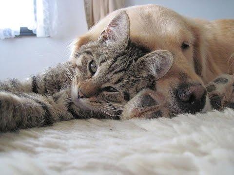 Comment Prévenir La Vieillesse Chez Les Chiens Et Les Chats