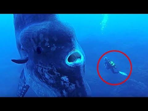 8 SCARIEST Creatures Faced By Divers!