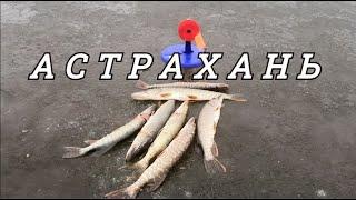 Рыбалка на жерлицы в АСТРАХАНИ Бешеный клев ЩУКИ на зимней рыбалке