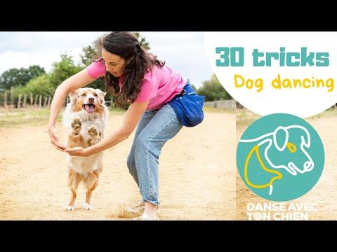 Dog dancing, + de 30 tours en moins de 4 mois - Obérythmée - Gipsy berger australien 18 mois