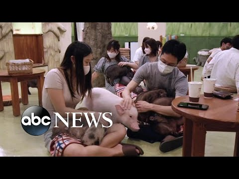 Inside Japans animal cafe phenomenon