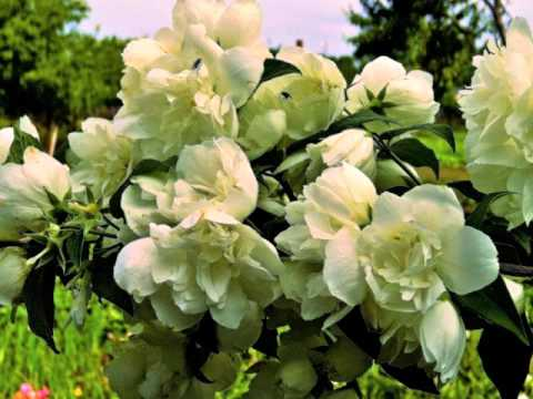 Картинки по запросу фото квіти