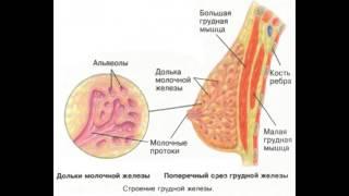 Фиброзно кистозная мастопатия: симптомы