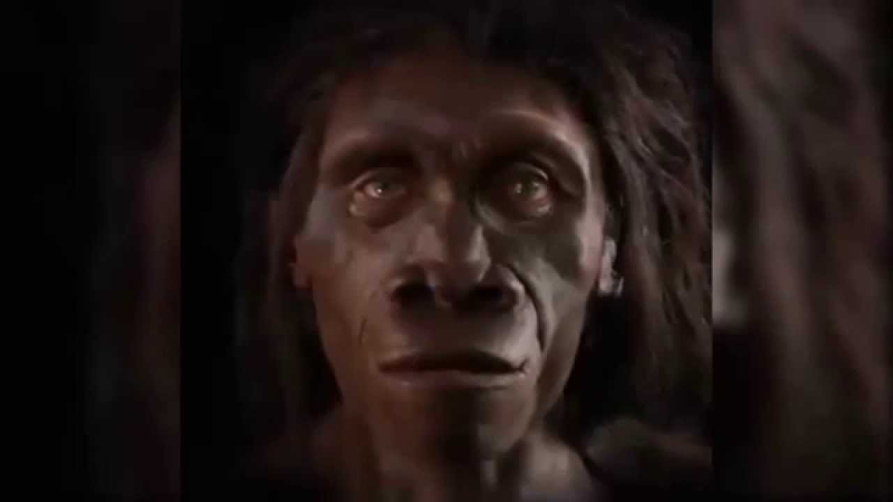 human face evolution in the last 6 million years youtube