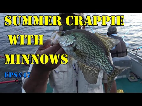 Summer Crappie On Minnows Using Poles.  Lake Talquin Eps#50
