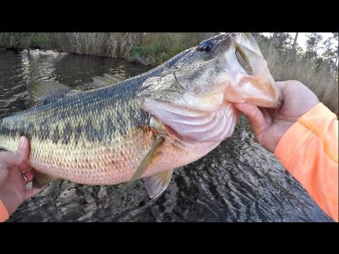 Best Lure to Catch Trophy Bass