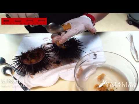 How to open and prepare Live California Sea Urchin Sushi
